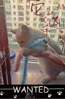 海苔被猫吃了