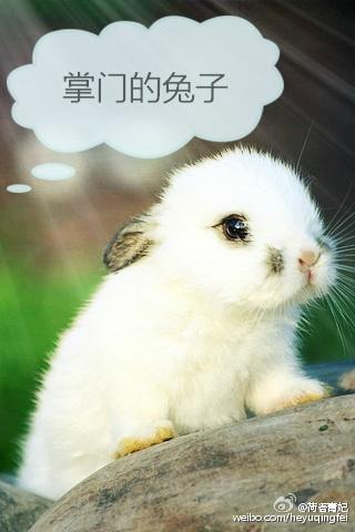 掌门的兔子